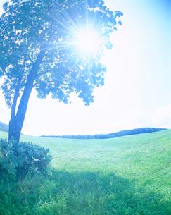 牧草地と木立の写真素材 [FYI01518222]