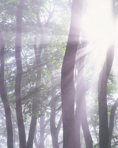 木漏れ日の写真素材 [FYI01518355]