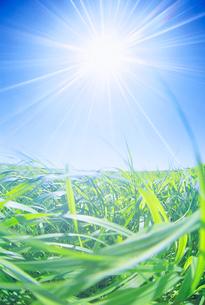 牧草地と風の写真素材 [FYI01518390]