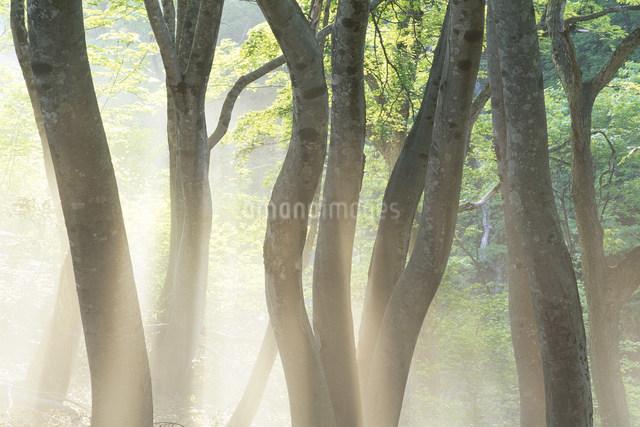 木漏れ日の写真素材 [FYI01518469]