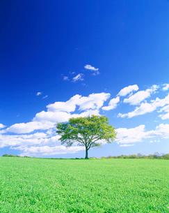 牧草地と木立の写真素材 [FYI01518472]