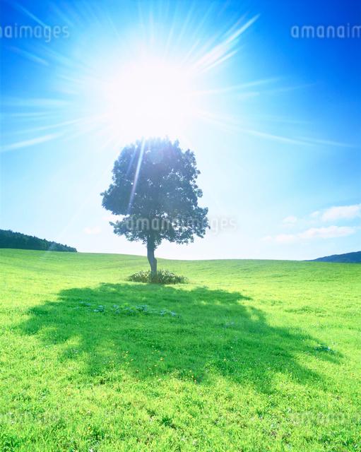 牧草地と木立の写真素材 [FYI01518555]