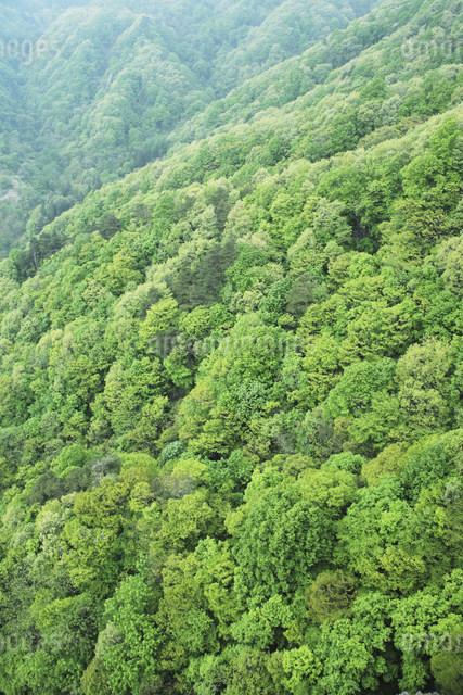 新緑の樹林の写真素材 [FYI01518556]
