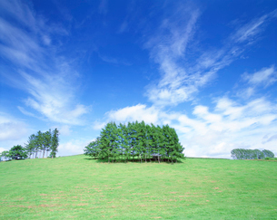 牧草地と木立の写真素材 [FYI01518629]