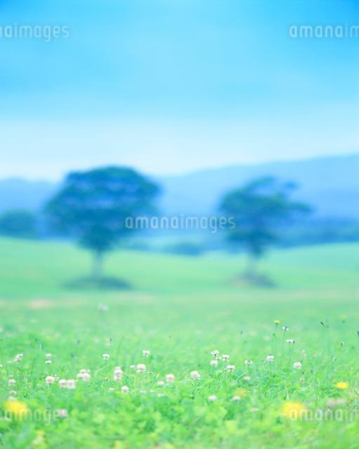 シロツメクサ咲く牧草地と木立の写真素材 [FYI01518837]
