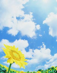 花と空の写真素材 [FYI01519129]