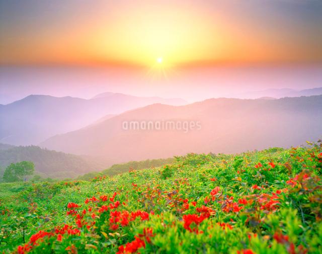 レンゲツツジと山並みと朝日の写真素材 [FYI01519137]