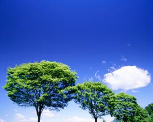 ケヤキと雲の写真素材 [FYI01519149]