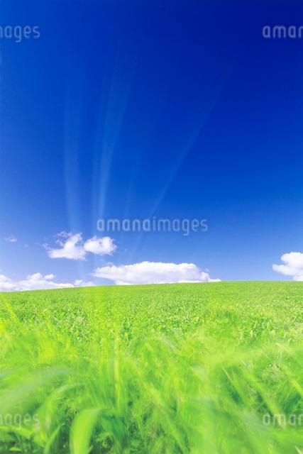 牧草地と風の写真素材 [FYI01519321]