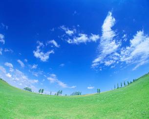 草原とポプラの写真素材 [FYI01519406]