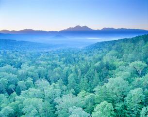 樹林帯と西クマネシリ岳の朝の写真素材 [FYI01519440]