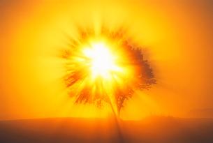 朝霧の光芒の写真素材 [FYI01519590]