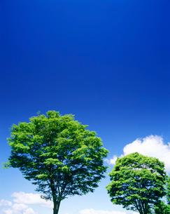 ケヤキと雲の写真素材 [FYI01519649]