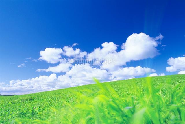 牧草地と風の写真素材 [FYI01519698]