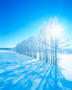 霧氷のカラマツ林と雪原の写真素材 [FYI01519724]