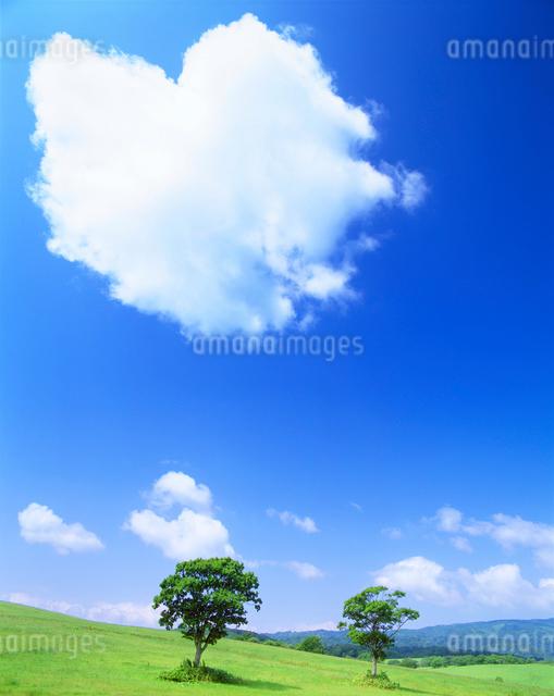 牧草地と木立の写真素材 [FYI01519774]