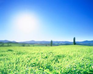 牧草地とポプラ並木の写真素材 [FYI01519820]