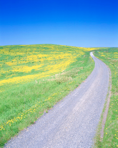 タンポポ咲く牧草地と道の写真素材 [FYI01519822]