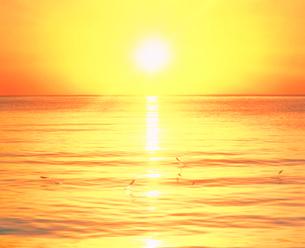 跳ねる魚と朝日の写真素材 [FYI01519841]