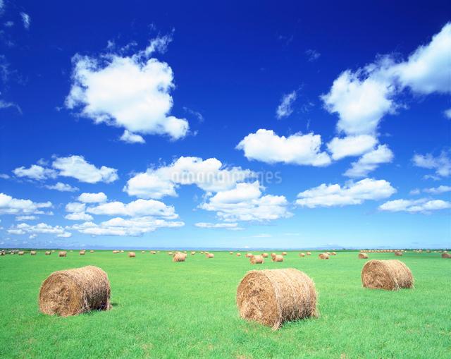 牧草ロールの写真素材 [FYI01519921]