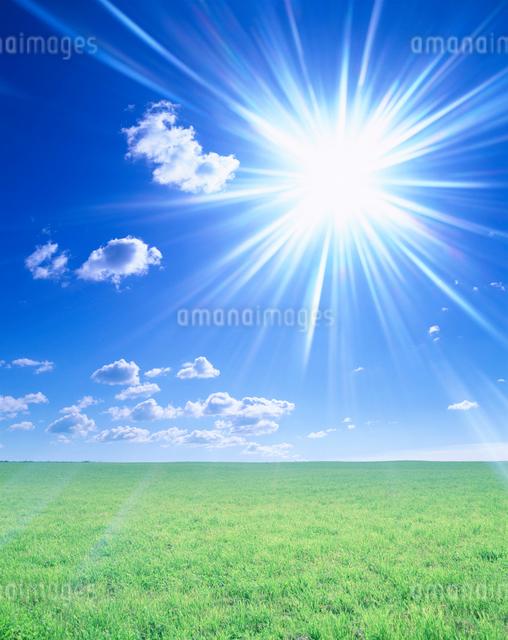 牧草地と太陽の写真素材 [FYI01520067]