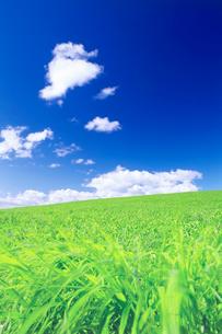 牧草地と風の写真素材 [FYI01520096]