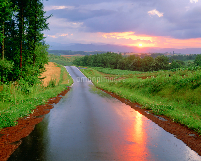 雨上がりの道路と夕日の写真素材 [FYI01520199]