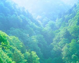 樹林帯の朝の写真素材 [FYI01520260]