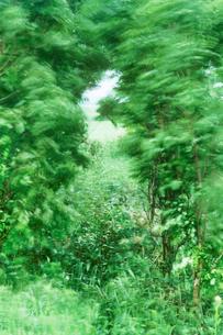 新緑の樹林と風の写真素材 [FYI01520441]