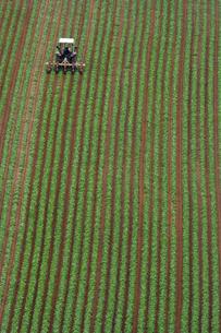 小豆畑とトラクターの写真素材 [FYI01520547]