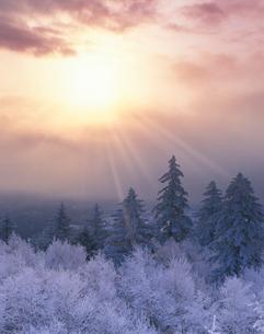 霧氷の樹林と朝日の写真素材 [FYI01520642]