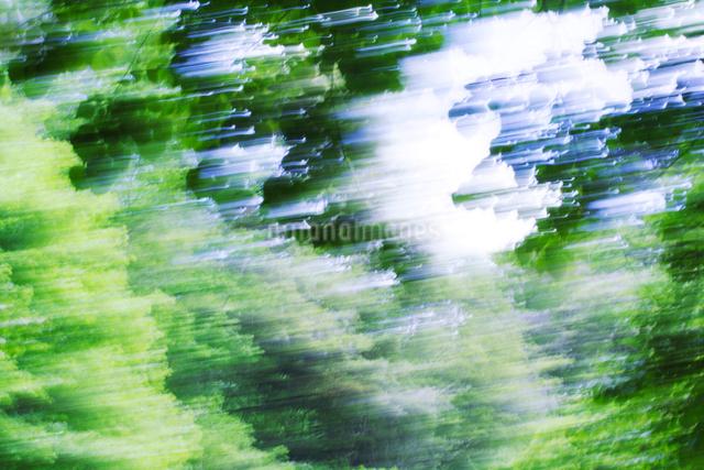 新緑の樹林の写真素材 [FYI01520673]