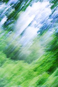 新緑の樹林の写真素材 [FYI01520700]
