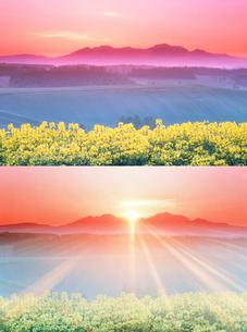 菜の花畑と大雪山 朝日の出る前後の写真素材 [FYI01520835]