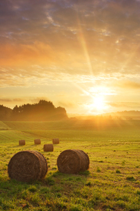 牧草ロールと朝日の写真素材 [FYI01520846]