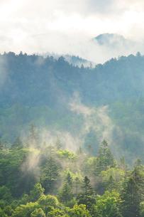 朝霧と新緑の樹林の写真素材 [FYI01520906]
