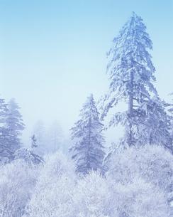樹氷林と朝霧の写真素材 [FYI01520957]