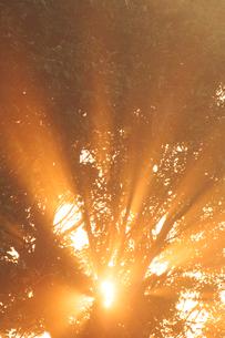 朝霧と光芒と木もれ日の写真素材 [FYI01521175]