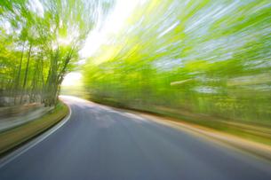 新緑のブナ林走行の写真素材 [FYI01521185]