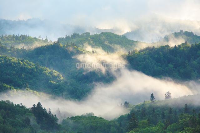 朝霧と新緑の樹林の写真素材 [FYI01521236]