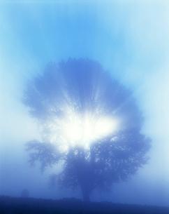 朝霧の光芒と哲学の木の写真素材 [FYI01521249]