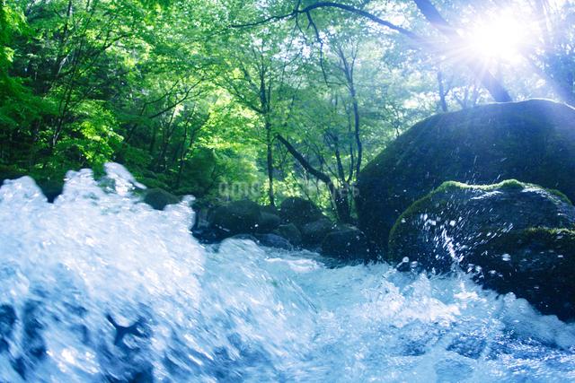 清流と木もれ日と飛沫の写真素材 [FYI01521366]