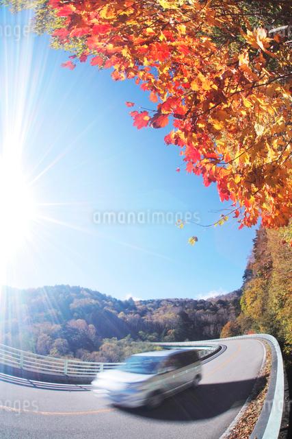 モミジと道路と車の写真素材 [FYI01521402]