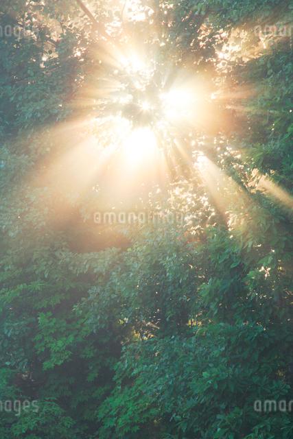 朝霧と光芒と木もれ日の写真素材 [FYI01521758]