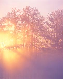 霧氷林と朝霧の光芒の写真素材 [FYI01521792]