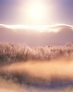 朝霧に包まれた霧氷林と朝日の写真素材 [FYI01522012]