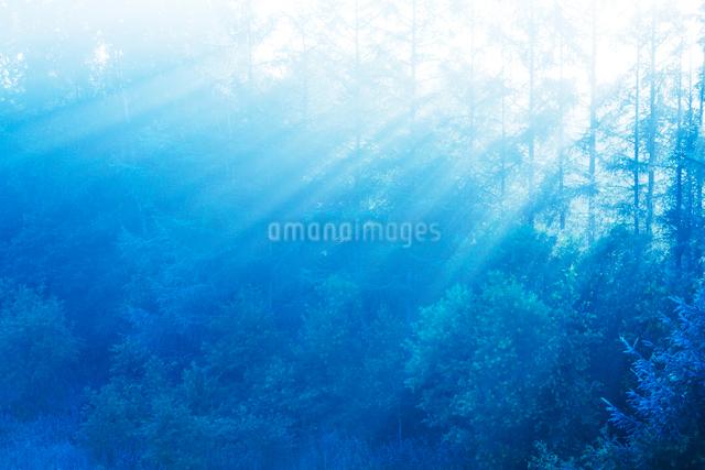 朝霧と光芒と木もれ日の写真素材 [FYI01522188]