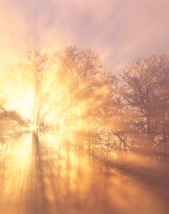 霧氷林と朝霧の光芒の写真素材 [FYI01522207]