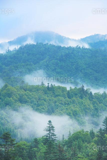 朝霧と新緑の樹林の写真素材 [FYI01522280]