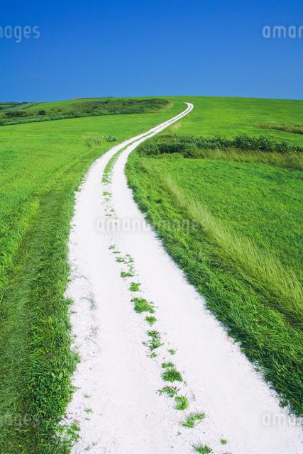 牧草地と道の写真素材 [FYI01522533]